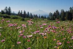Picco di montagna e dei Wildflowers Fotografie Stock