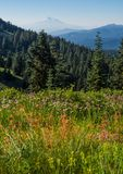 Picco di montagna e dei Wildflowers Fotografia Stock
