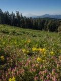 Picco di montagna e dei Wildflowers Fotografia Stock Libera da Diritti