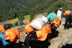 Picco di nupla del caravan dei yak e villaggio nurring dal Nepal Fotografia Stock