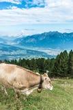 Picco di Patscherkofel vicino ad Innsbruck, Tirolo, Austria Immagine Stock Libera da Diritti