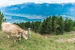 Picco di Patscherkofel vicino ad Innsbruck, Tirolo, Austria Fotografie Stock Libere da Diritti