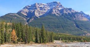 Picco di Rocky Mountain con gli alberi in priorità alta Fotografie Stock Libere da Diritti