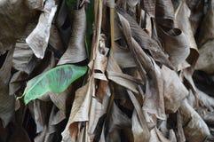 Picco di verde Fotografie Stock