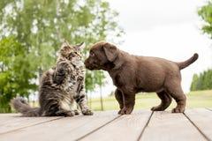 Piccola amicizia del gattino e del cucciolo Immagini Stock