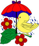 Piccola anatra sotto l'ombrello in pioggia Fotografia Stock Libera da Diritti