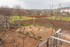 Piccola azienda agricola in Croazia con il pollo e campi in primavera Fotografia Stock Libera da Diritti