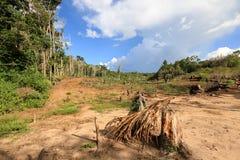 Piccola azienda agricola della manioca, Venezuela Fotografia Stock