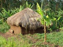 Piccola baracca vicino alle montagne di Rwenzori fotografia stock libera da diritti