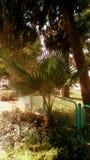 Piccola bella palma immagini stock libere da diritti