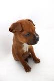 Piccola caduta del cucciolo del pugile di Brown addormentata Immagine Stock Libera da Diritti