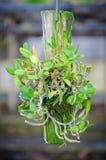 Piccola caduta delle orchidee su legname Fotografia Stock Libera da Diritti