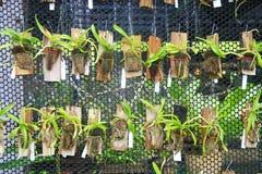 Piccola caduta delle orchidee su rete Fotografie Stock