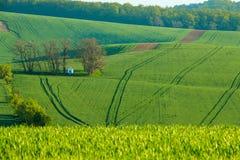 Piccola cappella nei campi della Moravia Fotografia Stock Libera da Diritti