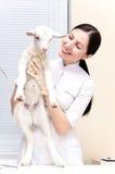 Piccola capra al veterinario Fotografia Stock Libera da Diritti