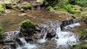 Piccola cascata in cascata pura dell'acqua dolce della foresta archivi video