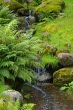 Piccola cascata nel parco Fotografia Stock Libera da Diritti