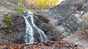 Piccola cascata nella foresta video d archivio