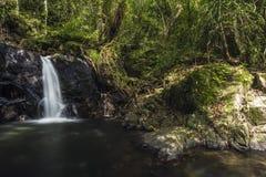 Piccola cascata nella foresta Fotografia Stock Libera da Diritti