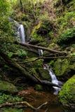 Piccola cascata piacevole in foresta profonda Fotografia Stock