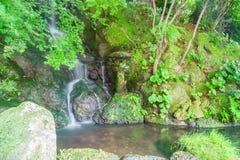 Piccola cascata serica che passa la foresta in uno stagno Immagine Stock Libera da Diritti
