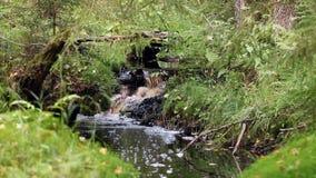 Piccola cascata su un'insenatura in foresta video d archivio