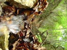 Piccola cascata tramite le foglie Fotografia Stock Libera da Diritti