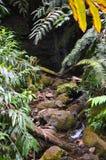 Piccola cascata tropicale Fotografia Stock Libera da Diritti