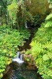 Piccola cascata tropicale Fotografie Stock Libere da Diritti