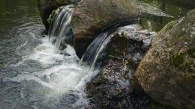 Piccola cascata in un fiume della foresta stock footage