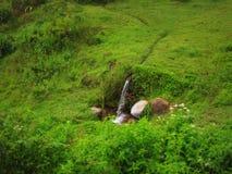 Piccola causa della cascata/leat/acqua Immagini Stock Libere da Diritti