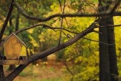 Piccola cinciarella su un albero Immagine Stock