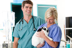 Piccola clinica animale del controllare Immagini Stock