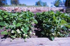Piccola coltura organica nella piantatrice fotografia stock libera da diritti