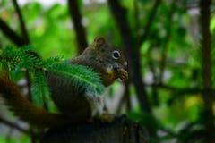 Piccola creatura del mondo del terreno boscoso fotografia stock libera da diritti