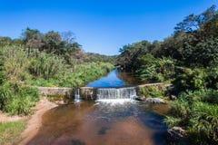 Piccola diga Vegatation del fiume Fotografia Stock Libera da Diritti