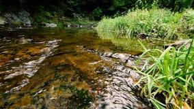 Piccola e corrente pulita piacevole in foresta video d archivio