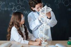 Piccola erba medica osservatrice che partecipa all'esperimento alla scuola Fotografie Stock