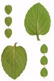 Piccola erba verde Fotografia Stock