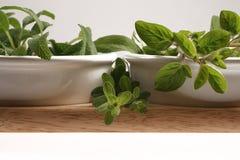 Piccola erba verde Fotografie Stock