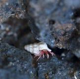 Piccola eremita fra le rocce fotografia stock