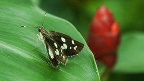 Piccola farfalla Immagine Stock