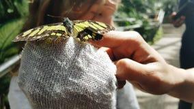 Piccola farfalla Immagini Stock