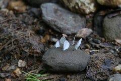 Piccola farfalla blu Immagini Stock