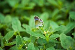Piccola farfalla sul piccolo fiore Fotografia Stock Libera da Diritti