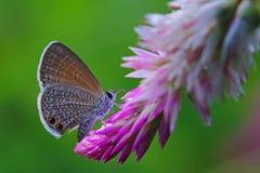 Piccola farfalla sveglia Immagine Stock Libera da Diritti