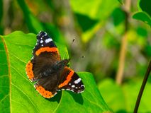 Piccola farfalla sveglia pronta a decollare immagine stock
