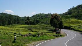 Piccola fattoria del T di Java immagini stock libere da diritti