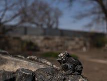piccola figura della pietra della rana all'aperto fotografia stock