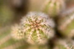 Piccola fine del cactus su fotografie stock